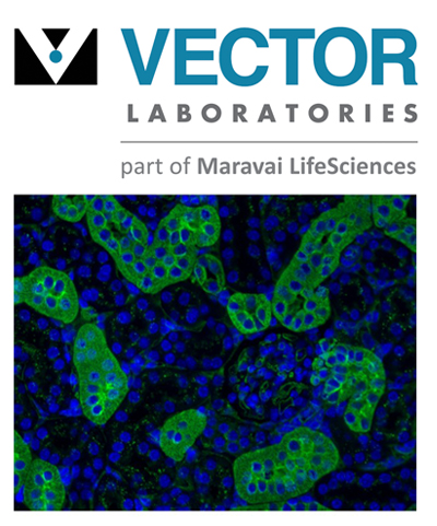 Vector Laboratories IHC